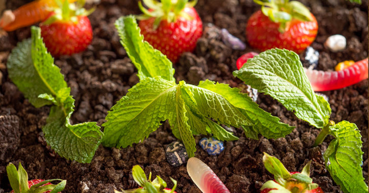 Get Into Gardening With Your Kids This Is Dirt And Worms Like You