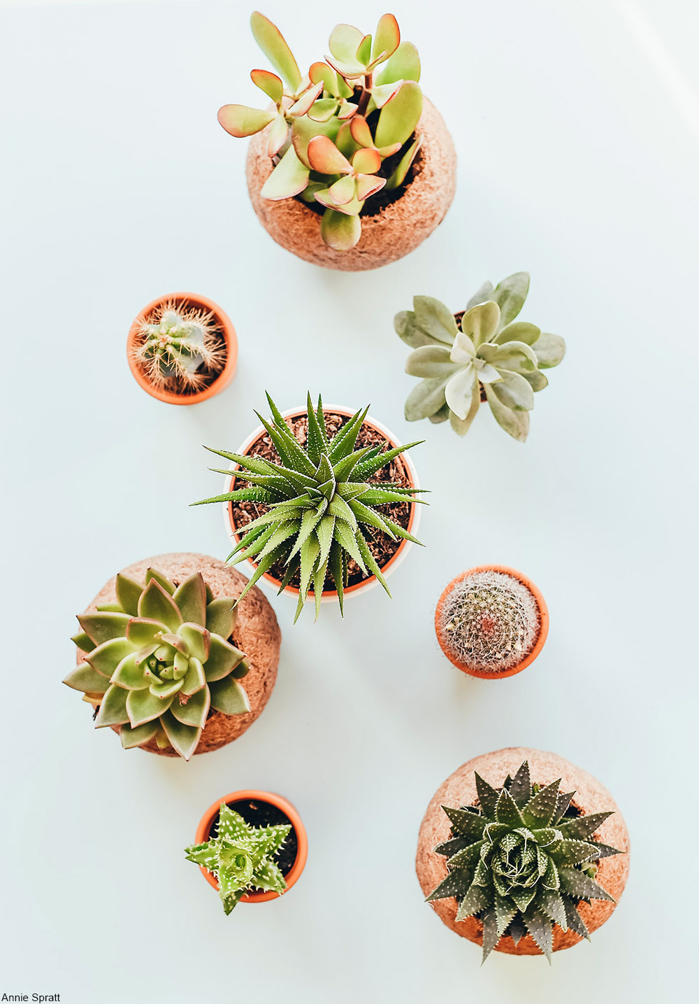 small potted succulents