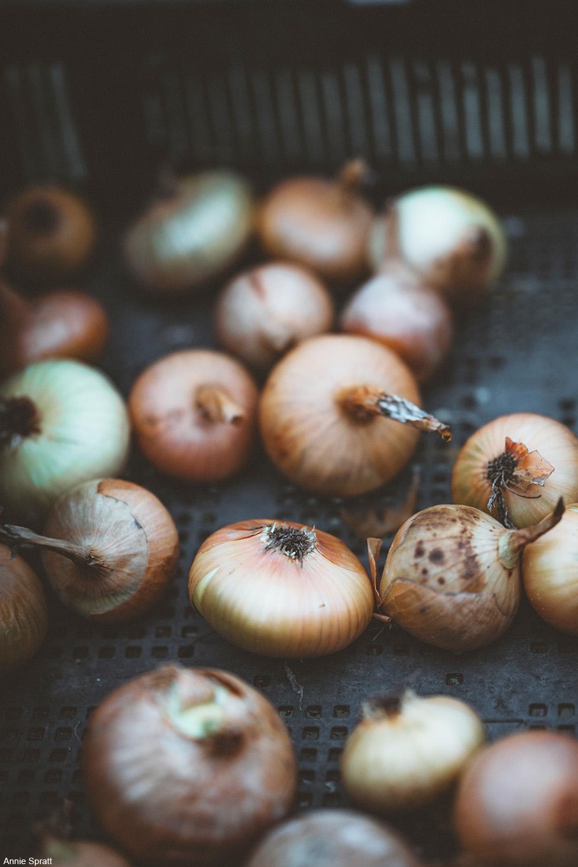 onions in a bin