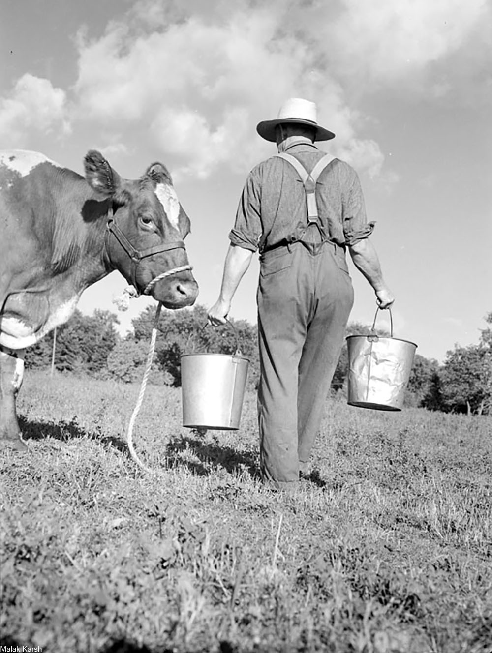 collecting milk in buckets after hand milking cows, black and white photo