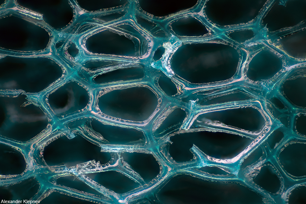 microscopic view of a green abrasive sponge