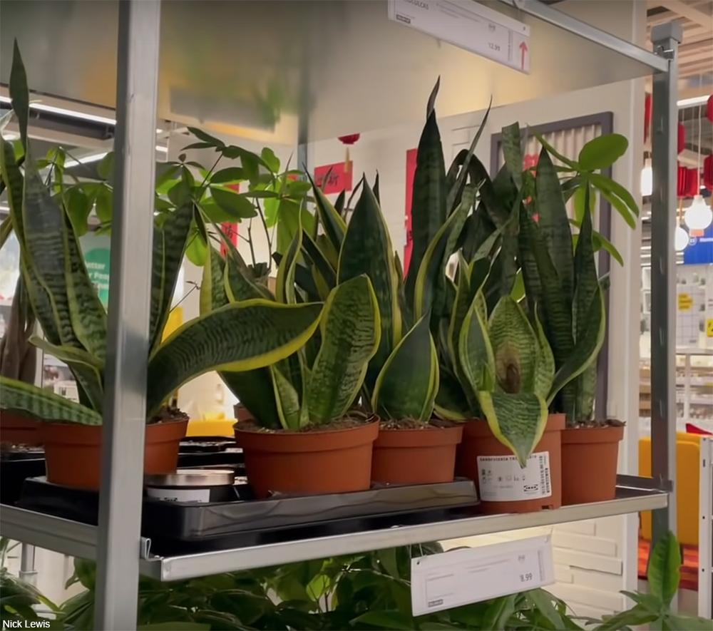 live plants sat IKEA