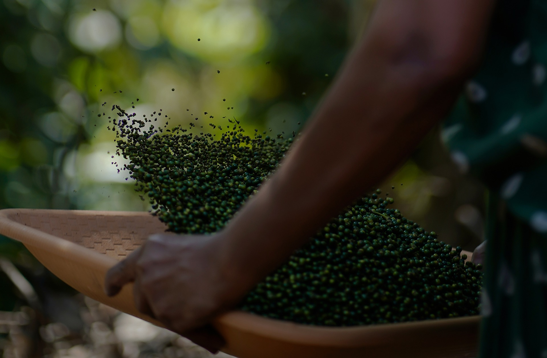 Kerala Villager with Pepper