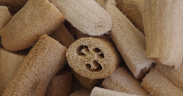 How To Grow Loofah Sponges