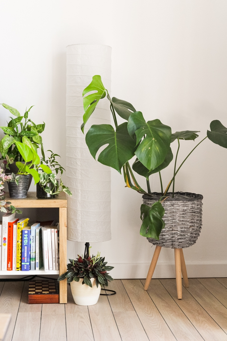 selection on indoor plants
