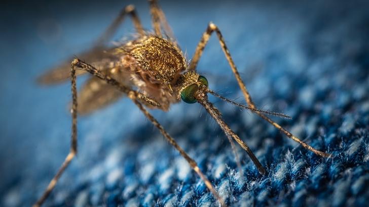mosquito close-up on dark clothing