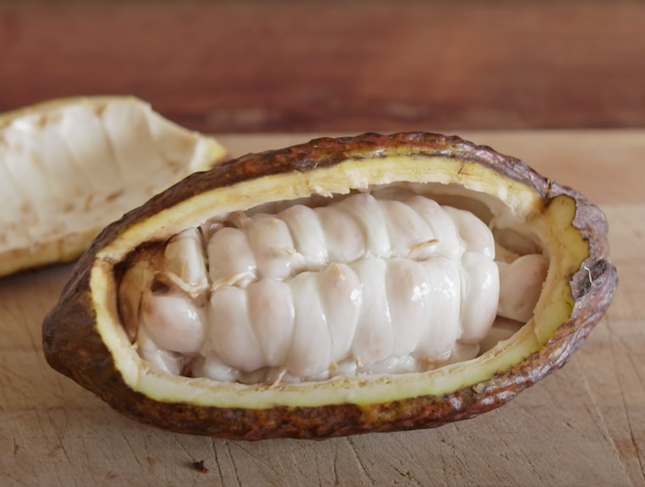 inside of a cocoa pod