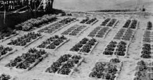 A:shiwi waffle gardens, 1920s