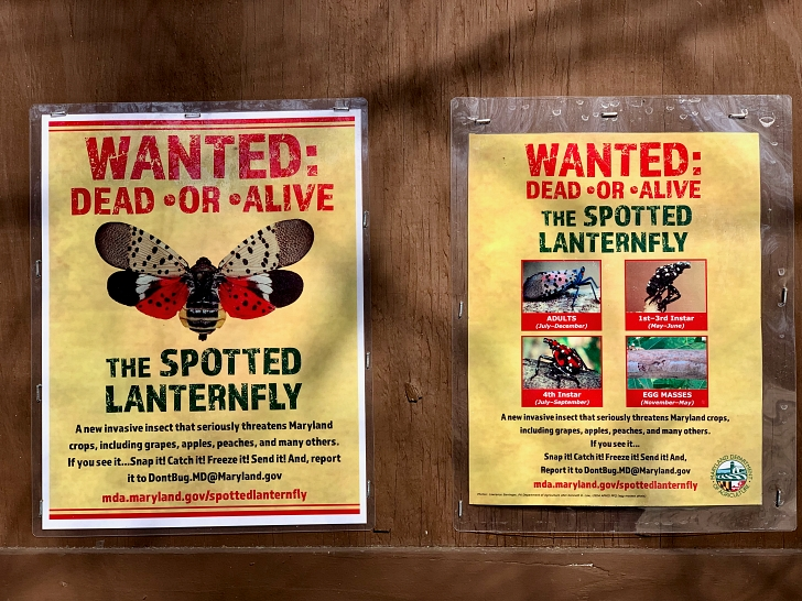 spotted lanternfly wanted posters