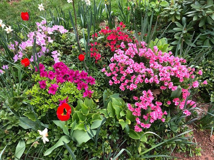 garden plants in bloom