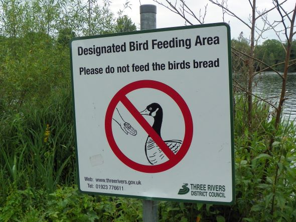 Dont feed birds bread