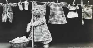 Cat Wearing clothing