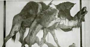 """Lion Attacking Dromedary"" diorama on display at The Carnegie Museum of Natural History in Pittsburgh, as seen in the 1910s"