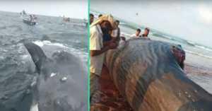 yemen fisherman find ambergris