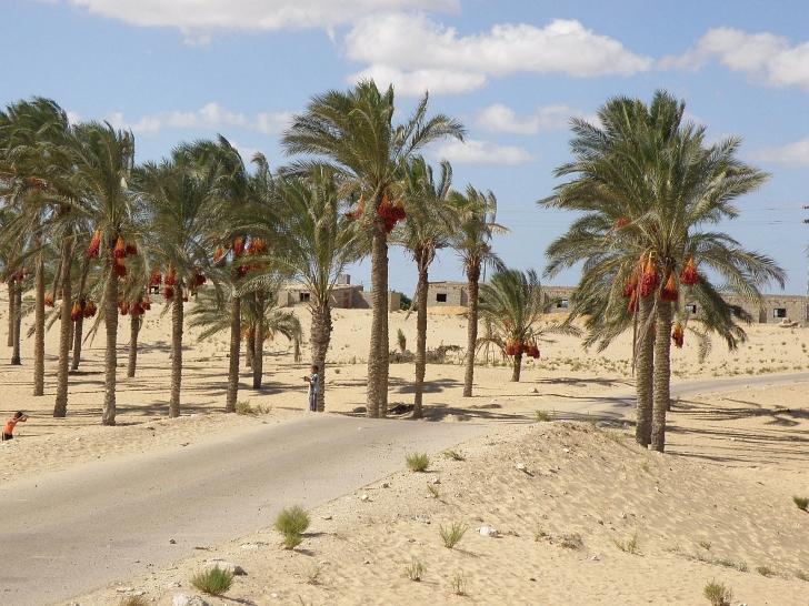 Egyptian farming village