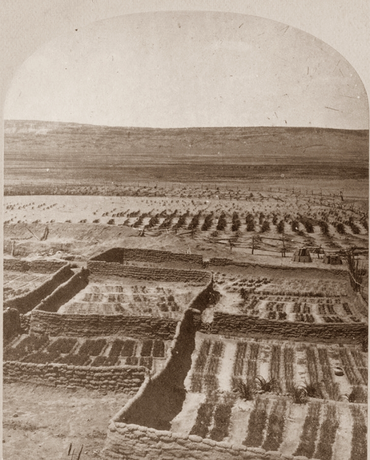 A:shiwi waffle gardens in the 1870s