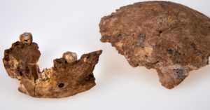 Nesher Ramla archaeology site fossils