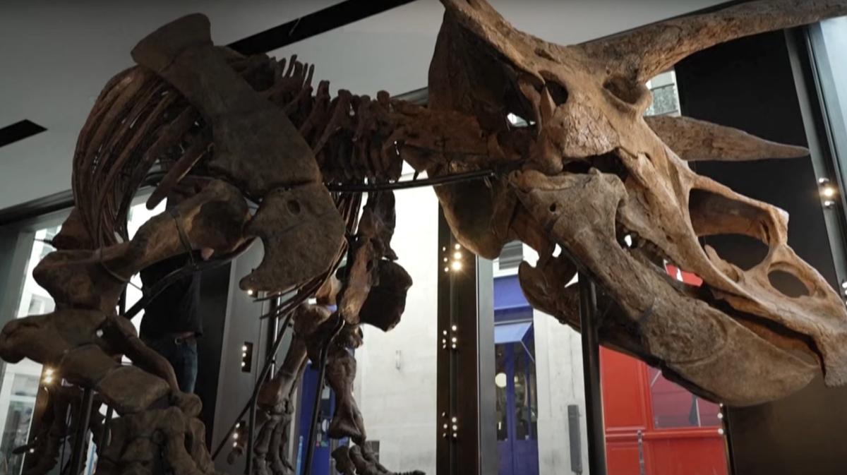 Big John Triceratops skeleton