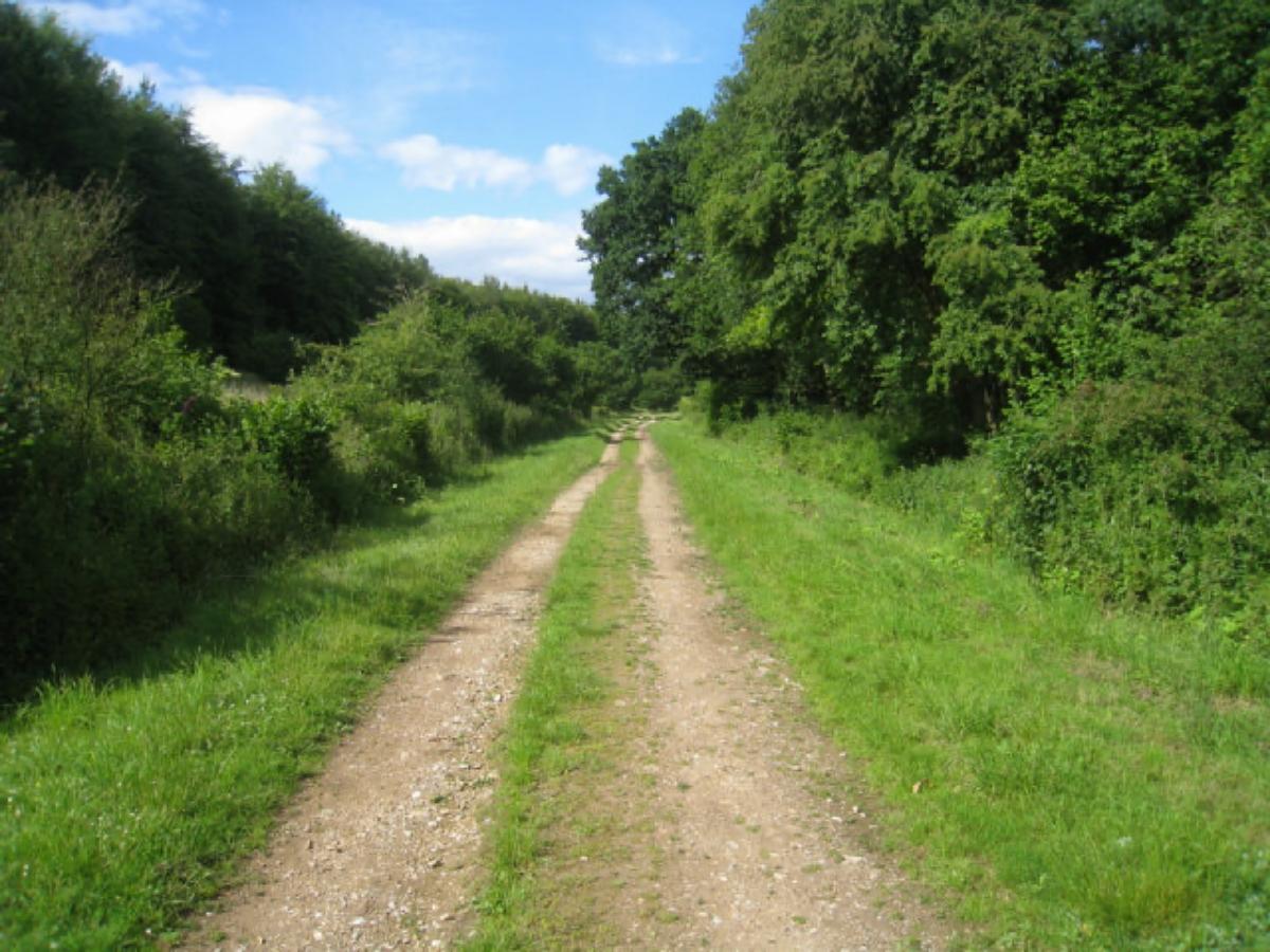 Nutley woods East Sussex